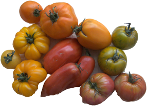 Luteine dans les tomates