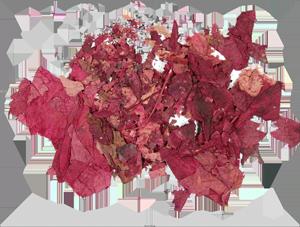 Vignes rouge vision